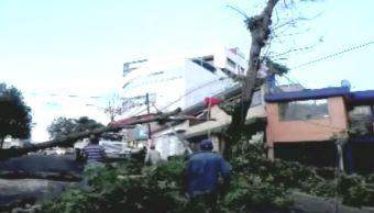 Rachas de viento dejan afectaciones en Xalapa, Veracruz