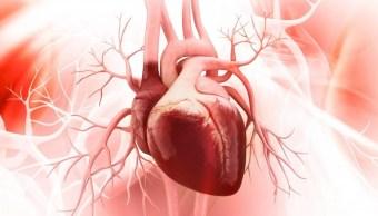 Científicos de Texas logran regenerar un corazón tras un infarto