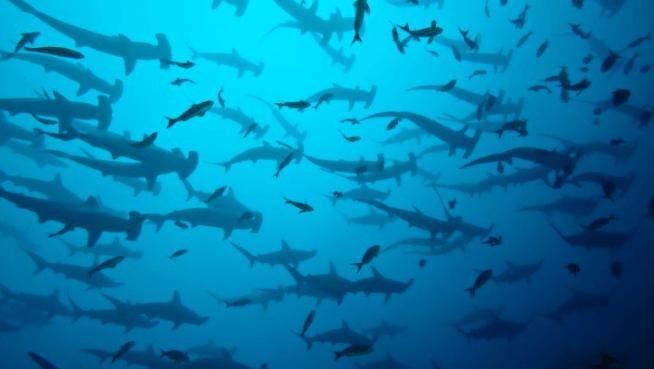 Tiburones, delfines y peces, verdadero tesoro de Isla del Coco
