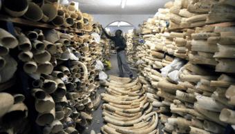 Toneladas de marfil en un parque nacional en Zimbabwe