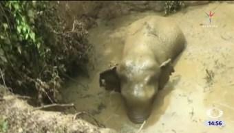 Rescatan a elefantito en Sri Lanka