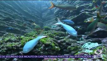 EPN habla con John Kerry sobre proyecto del Parque Nacional Revillagigedo