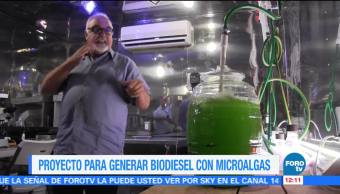 Proyecto mexicano propone crear diésel a partir de microalgas