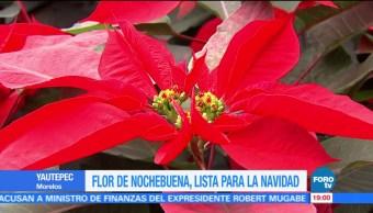 Morelos uno de los principales productores de la Flor de Nochebuena