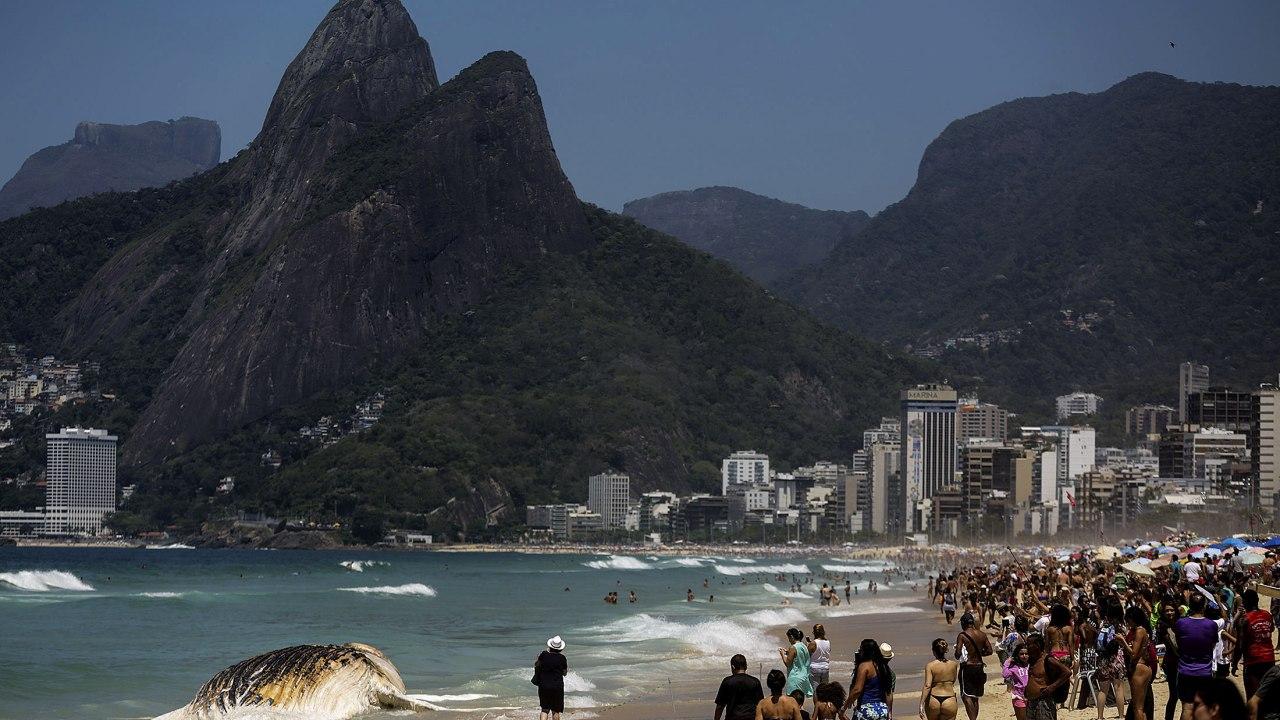 Aparece muerta una ballena en playa de Ipanema de Río de Janeiro