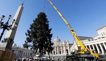 enorme arbol de navidad adorna la plaza de san pedro