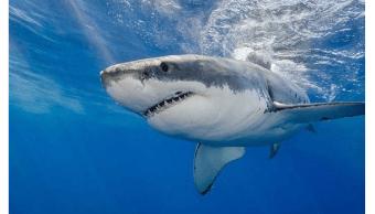 Ataque de tiburón se registra en playa cubana