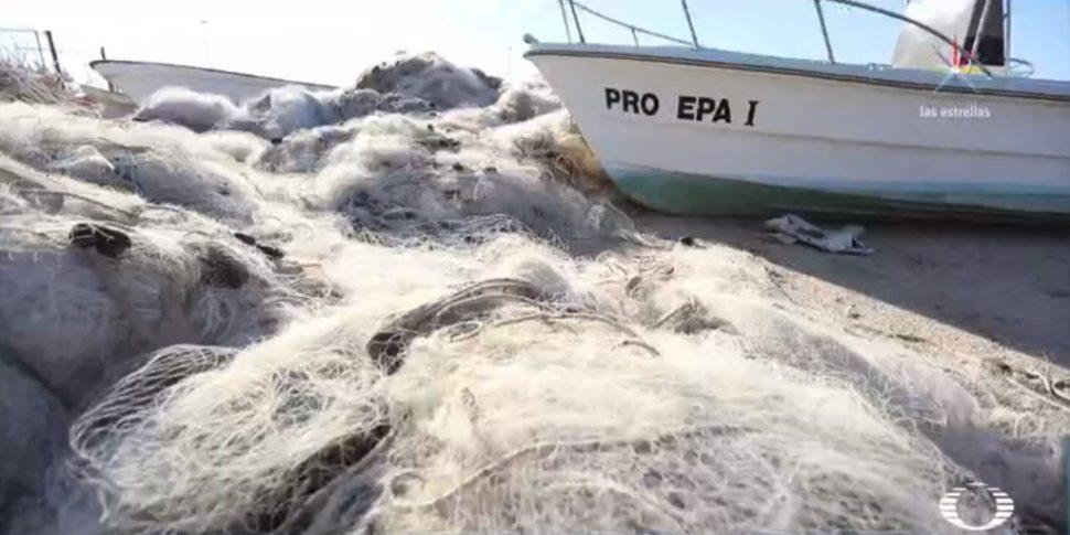 Crimen y corrupción, las otras redes que afectan a la vaquita marina
