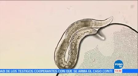 Mecanismos Restaurar Células Dañadas Doctora Diane Pérez