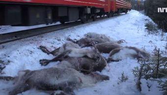 Renos muertos por el paso del tren en Noruega