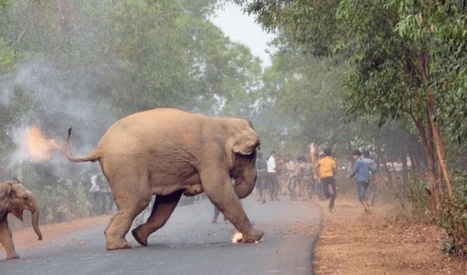 Elefante bebé en llamas indigna y gana concurso de fotografía en la India