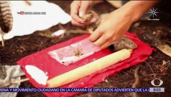 'La medicina del sapo', práctica alucinógena en Sonora