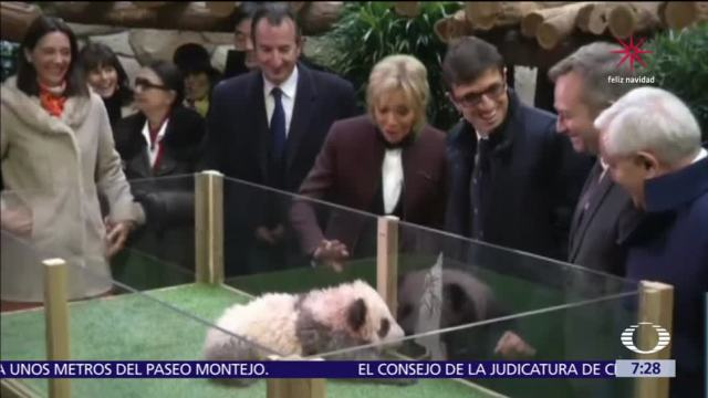 Brigitte Macron bautiza al primer oso panda nacido en Francia