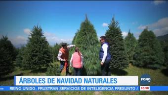 Cómo tener un árbol de Navidad natural sin dañar el medio ambiente