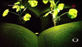 Crean plantas capaces de emitir luz