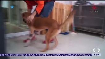 Perrito con prótesis conmueve las redes sociales