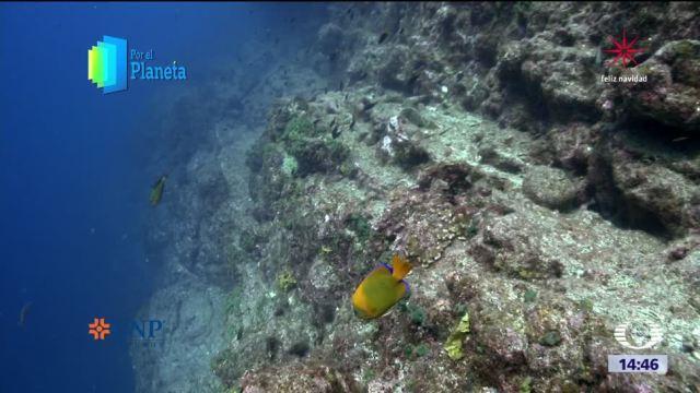 Los corales y la riqueza biológica de Revillagigedo