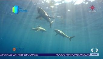 Islas Revillagigedo, la última frontera, en riesgo por pesca y turismo