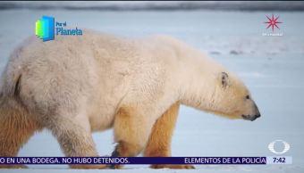 Gigantes de Alaska, la última frontera de Norteamérica