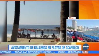 Ballenas jorobadas sorprenden a turistas en el puerto de Acapulco