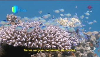 Por el Planeta: Reserva natural Coral Beach