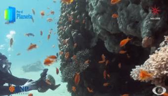 Arrecifes de coral del mar Rojo, tesoro de Israel