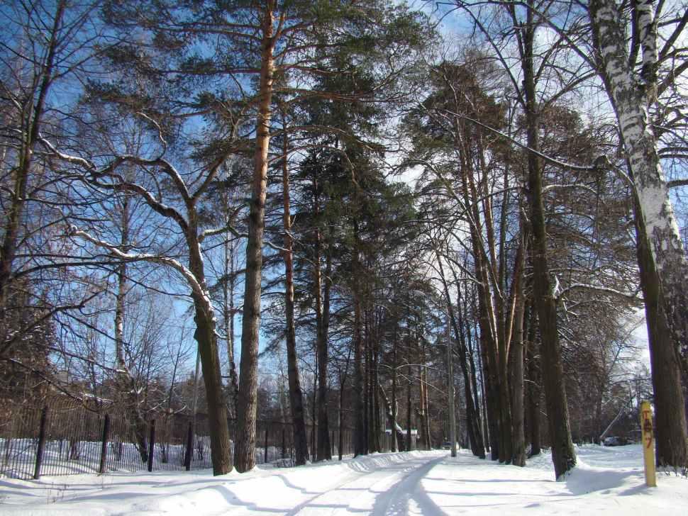 bosque-moscu-rusia-naturales