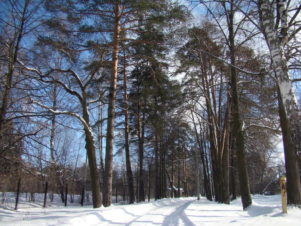 Ecologismo en las experiencias Socialistas. Bosque-moscu-rusia-naturales