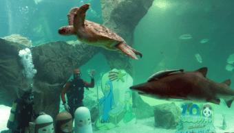 Zoo de Madrid desea feliz Navidad con nacimiento en acuario