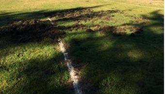 Familias de jabalíes terminan con campo de futbol en España