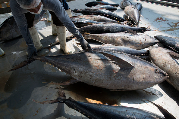 La OMC mantiene su decisión contra el atún mexicano en su disputa con EU