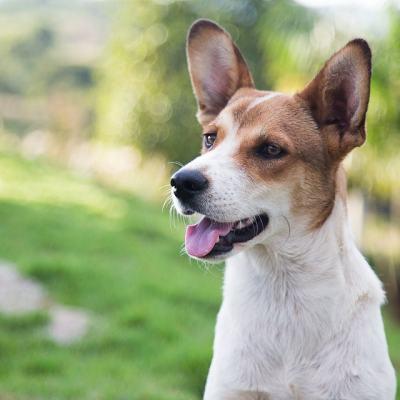 ¿Cuál es la música relajante para perros?