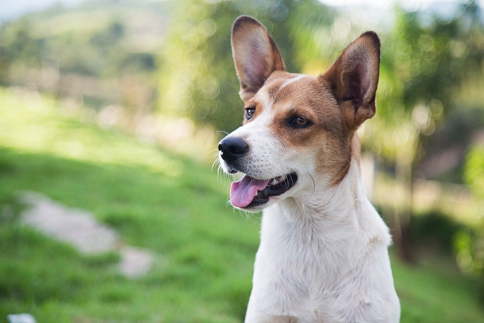 Perro_Adoptado