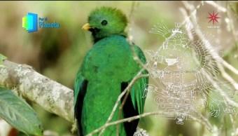 Por el Planeta: una vuelta por Costa Rica