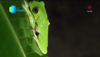 Costa Rica alberga una de cada 20 especies de fauna
