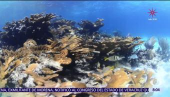 La reproducción del coral, un proceso oculto bajo el mar