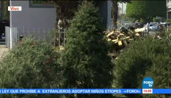 Intercambian árboles de Navidad por plantas en Venustiano Carranza