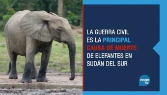 Animales: los otros damnificados de la guerra