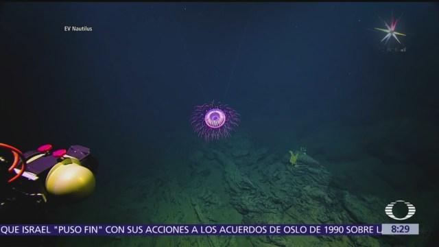 Captan extraña medusa en el Archipiélago de Revillagigedo