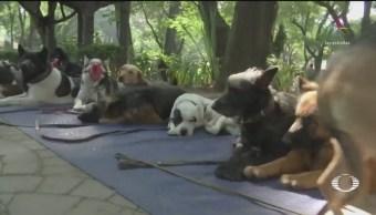 Crece el robo de perros en la CDMX