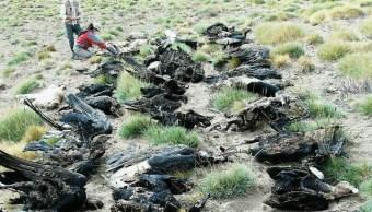 Hallan muertos 34 cóndores provincia argentina Mendoza