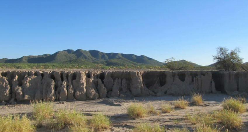INAH descubre vestigios del maíz más antiguo en Sonora