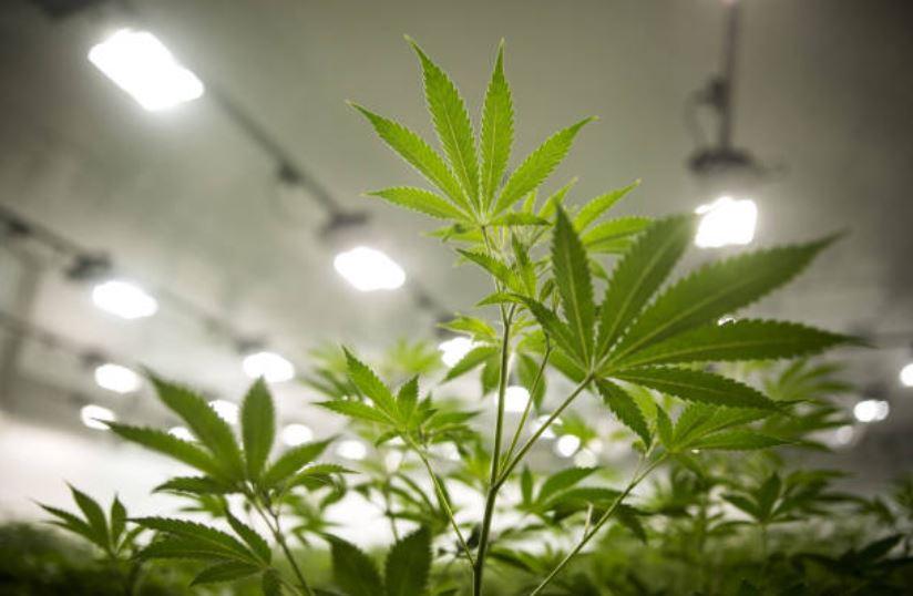 Vermont, noveno estado de EU en legalizar la marihuana