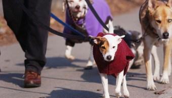 Recomendaciones para proteger del frío a humanos y mascotas