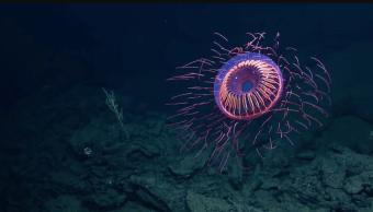 medusa-mexico-1