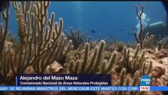 Monitorean salud de arrecifes de coral del Caribe mexicano