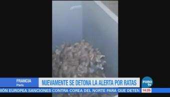 Nuevamente se detona la alerta por ratas en París