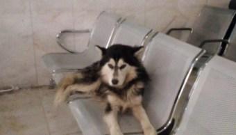 perro-fiel-hachiko-mexicano