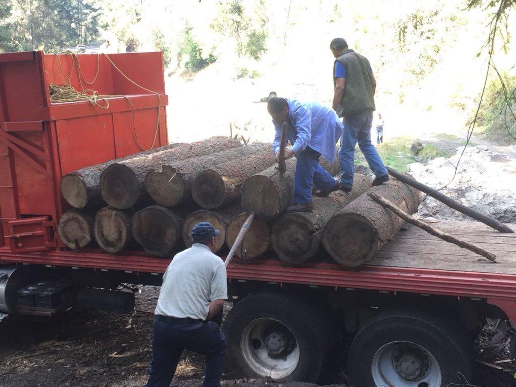 Aseguran madera en rollo en el Nevado de Toluca