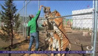 ¿Que pasó con los animales de circo tras prohibición de incluirlos en el show?